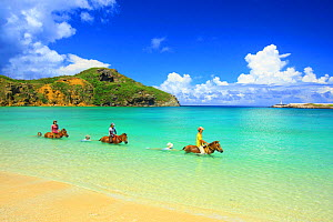 People riding Yonaguni horses in the sea with others floating along holding onto their tails, Nishizaki, Okinawa - Aflo