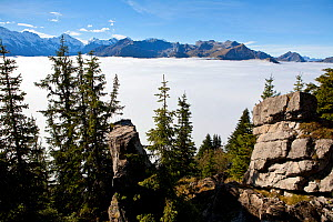 View west from near Schynigge Platte over a cloud sea covering the Lauterbrunnen valley, The Bernese Oberland alpine region, Switzerland, October 2013. - John Waters