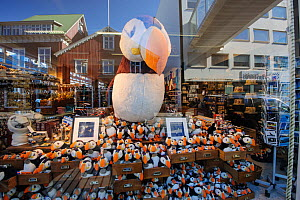 Cuddly toy Puffins (Fratercula arctica) in shop window, Reykjavik, Iceland, July 2012. - Terry  Whittaker
