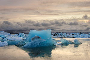 Ice floating on Jokulsarlon glacial lake,Vatnajokull Glacier, Iceland, July 2012.  -  Terry  Whittaker