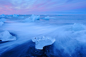 Ice floating on glacial lake Jokulsarlon, Vatnajokull glacier, Iceland, July 2012.  -  Terry  Whittaker