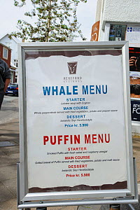 Menu outside a restaurant advertising Whale and Puffin meat, Reykjavik, Iceland, July 2012.  -  Terry  Whittaker