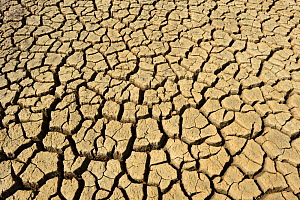 Cracks in mud in dried up saline lagoon caused by drought, The Naze, Walton-on-the-Naze, Essex, England, UK, September. - Will Watson