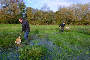 Freshwater ecologists dip netting a pond, Bishon Meadow SSSI, November 2013, Herefordshire, England.  -  Will Watson