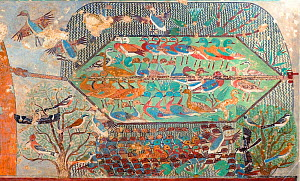 The Ancient Egyptian painted tomb chapel of Khnumhotep ll featuring remarkably accurate images of birds that include Masked Shrike, Red-backed Shrike, Hoopoe, Redstart, Pintails.  This is a scene show... - David Tipling