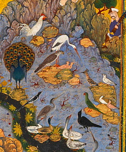 The Conference of the Birds by�Habiballah. Detail from page of a manuscript of the Mantiq al-Tayr (The Language of the Birds) by Farid al-Din Attar, circa 1600,  Safavid, Isfahan, Iran.  -  David Tipling