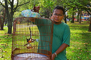 Abdul Rahman with his White-rumped shama (Copsychus malabaricus) worth around $2000, which he enters into competitions. Singapore, July 2011. - David Tipling