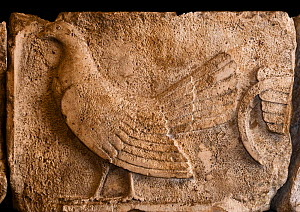 Frieze depicting a Cockerel from a tomb at Xanthos in Lycia, Turkey from between 470 and 460 BC.  It was a Lycian tradition to sacrifice cockerels and make other sacrificial offerings to the deceased,... - David Tipling