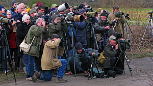 Twitchers gathering to watch White-crowned Sparrow (Zonotrichia leucophrys) at Cley, North Norfolk, England, UK, January 2008.  -  David Tipling