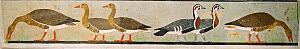 'Meidum geese' a painted stucco of various geese (Red-breasted, Bean and White-fronted Geese)  from the Tomb of Nefermaat and Atet, Old Kingdom, c.2620 BC (painted stucco), Egyptian 4th Dynasty (c.261... - David Tipling