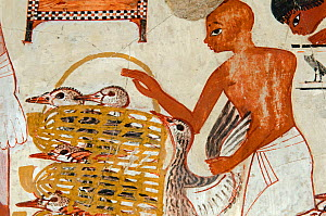 Painting from the tomb wall of Nebamun, Thebes, Egypt. Showing Nebamun inspecting flocks of geese and herds of cattle. From late 18th Dynasty, around 1350 BC. - David Tipling