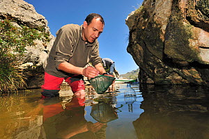 Dr. Jaime Bosch in search of the Majorcan midwife toad (Alytes muletensis). This pond is the habitat for the Majorcan midwife toad (Alytes muletensis) Torrent de s'Esmorcador, Majorca, Spain, April 20... - Solvin Zankl
