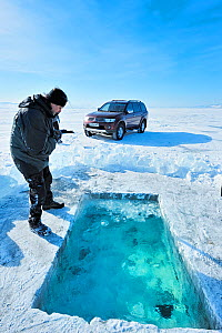 Man looking into ice hole dug for ice diving, Lake Baikal, Siberia, Russia, March. Model released. - Olga Kamenskaya