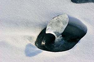 Ice vase / ice spike forming in hole in snow, Lake Baikal, Siberia, Russia, March.  -  Olga Kamenskaya