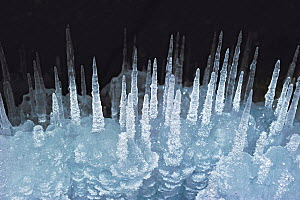 Ice stalagmites / ice spikes formation, Lake Baikal, Siberia, Russia, March.  -  Olga Kamenskaya