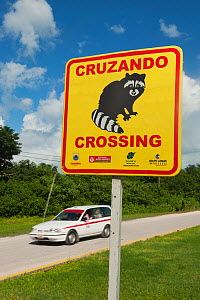 Pygmy Raccoon (Procyon pygmaeus) sign warning drivers, Cozumel Island, Mexico. Critically endangered species. - Kevin  Schafer