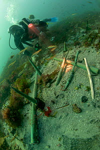 Copper keel pins from the wreck of a British First rate warship HMS Colossus wrecked in 1758. St Mary's Roads, Isles of Scilly, England, UK, August.  -  Michael Pitts