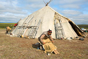 Rita Votgyrgina, a Chukchi woman, softening a reindeer skin with a tradional scraping tool, outside her Yaranga (tent) at a reindeer herders' summer camp on the tundra. Iultinsky District, Chukotka, S...  -  Bryan and Cherry Alexander