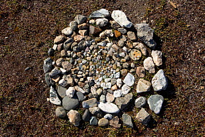 A circular pattern of small stones on the ground at a Chukchi reindeer herder's camp symolises the reindeer herd. The Chukchi believe that these carefully selected and positioned stones will help keep... - Bryan and Cherry Alexander