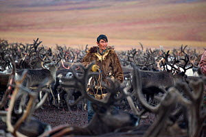 Chukchi reindeer herder, Vanya Votgyrgin, walks amongst the reindeer herd with his lasso during the Chukchi 'Festival of the Young Reindeer.' Iultinsky District, Chukotka, Siberia, Russia, August 2013...  -  Bryan and Cherry Alexander