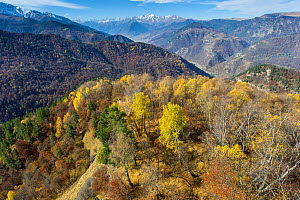Forest line in valley near Teberda settlement, foothills of Caucasus Mountains, Karachay-Cherkessia, Russia. October 2013.  -  Dr.  Axel Gebauer
