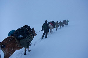 German film crew trecking with horses through snow, east Caucasus near Saribash settlement, Gakh area, Azerbaijan, December 2012.  -  Dr.  Axel Gebauer