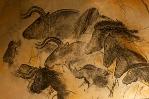 Replica of prehistoric rock paintings in Chauvet Cave, showing Woolly rhinoceros (Coelodonta antiquitatis), Wild horses (Equus ferus) and Auroch bulls (Bos primigenius), Chauvet-Pont-d'Arc Cave, Ardec... - Philippe Clement