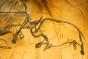 Replica of prehistoric rock paintings in Chauvet Cave, showing Woolly rhinoceros (Coelodonta antiquitatis), Chauvet-Pont-d'Arc Cave, Ardeche, France. Editorial use only.  -  Philippe Clement