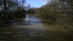 View of the River Avon in spate at Melksham, Wiltshire, England, UK, February 2014.  -  Nick Upton