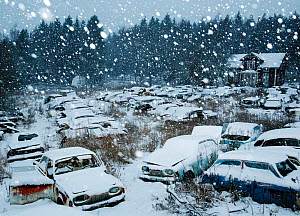 Snow falling in Bastnas car graveyard Varmland, Sweden, December. Winner of the Portfolio category in the Melvita Nature Images Awards competition 2014. - Pal Hermansen