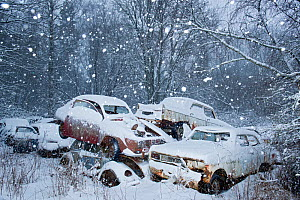 Snow falling in Bastnas car graveyard Varmland, Sweden, December. - Pal Hermansen
