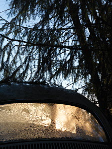 Light shining through the frost covered rear window of abandoned car, Car graveyard, Varmland, Sweden, December 2012.  -  Pal Hermansen