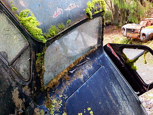 Moss covering abandoned car in car graveyard, Varmland, Sweden, December 2012. - Pal Hermansen
