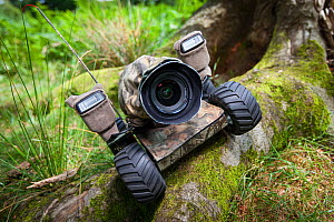 Beetle cam, remote controlled camera buggy set up on tree roots. - Will Burrard-Lucas