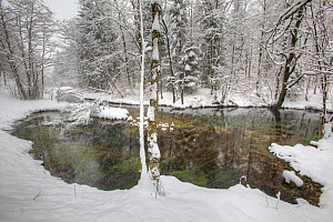 Spring creek in winter, Jogne river, Saane river tributary, Gruyere, Fribourg, Switzerland, February. Taken for the Freshwater Project. - Michel  Roggo
