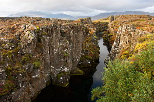 Canyon between the North American and Eurasian Plates at Thingvellir, Thingvellir National Park, UNESCO World Heritage Site, Iceland, September 2009. Taken for the Freshwater Project.  -  Michel  Roggo