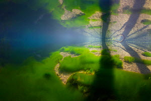 Underwater view of spring fed creek, Saane river tributary, in winter, Gruyere, Fribourg, Switzerland, February. Taken for the Freshwater Project. - Michel  Roggo