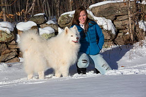 Young woman (age 18) with Samoyed dog at woodland edge by stone wall in snow, Ledyard, Connecticut, USA. (Non-ex) - LYNN M. STONE