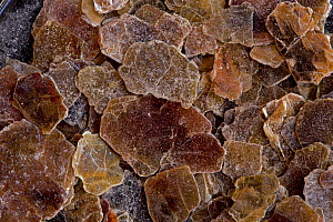Vermiculite flakes, a hydrous, silicate mineral classified as a phyllosilicate, it expands greatly when heated.  -  John Cancalosi