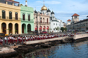 Schoolchildren lined up in row on Jose Marti day, Havana, Cuba, October 2011.  -  Rhonda Klevansky