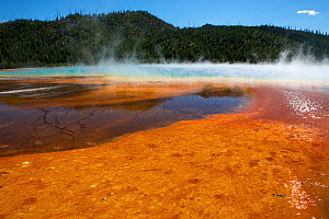 Colourful patterns formed by Cyano bacteria, Grand Prismatic Spring, Yellowstone National Park, Wyoming, USA, July. - Mark  MacEwen