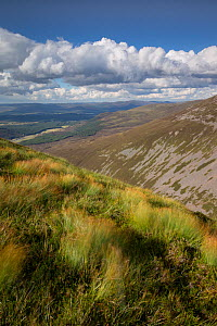 View north from Meall nan Sleac over Glenfeshie, Cairngorms National Park, Scotland, August 2013.  -  Peter Cairns