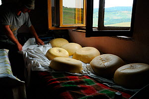 Traditional Transylvanian sheep cheese. Gurghiu Mountains, Romania, July. - Zoltan Nagy