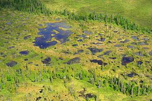 RF- Aerial view of peat bogs and taiga boreal forest, Sjaunja Bird Protection Area, Greater Laponia Rewilding Area, Lapland, Norrbotten, Sweden, June 2013. (This image may be licensed either as rights...  -  Wild  Wonders of Europe / Widstrand