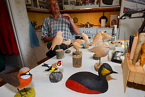 Bird sculptor with a collection of sculpted birds on kitchen table, Jokkmokk, Greater Laponia Rewilding Area, Lapland, Norrbotten, Sweden, June 2013. - Wild  Wonders of Europe / Widstrand