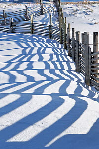 Fence with shadows on snow, Buffalo Ranch, Lamar Valley, Yellowstone National Park, Wyoming, USA, January 2014.  -  Kirkendall-Spring