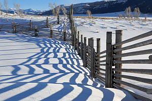 Fence line at the Buffalo Ranch, Lamar Valley, Yellowstone National Park, Wyoming, USA, January 2014.  -  Kirkendall-Spring