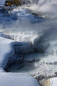 Lower travertine terraces, Mammoth Hot Springs in Yellowstone National Park, Wyoming, USA, January 2014.  -  Kirkendall-Spring