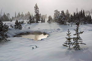 Snow covered trees and pond, West Thumb Gerser Basin, Yellowstone National Park, Wyoming, USA, February 2014.  -  Kirkendall-Spring