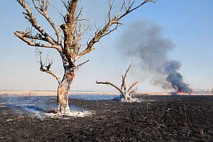 Fire in the distance and scorched ground, Marievale Bird Sanctuary, South Africa, June 2013  -  Richard Du Toit